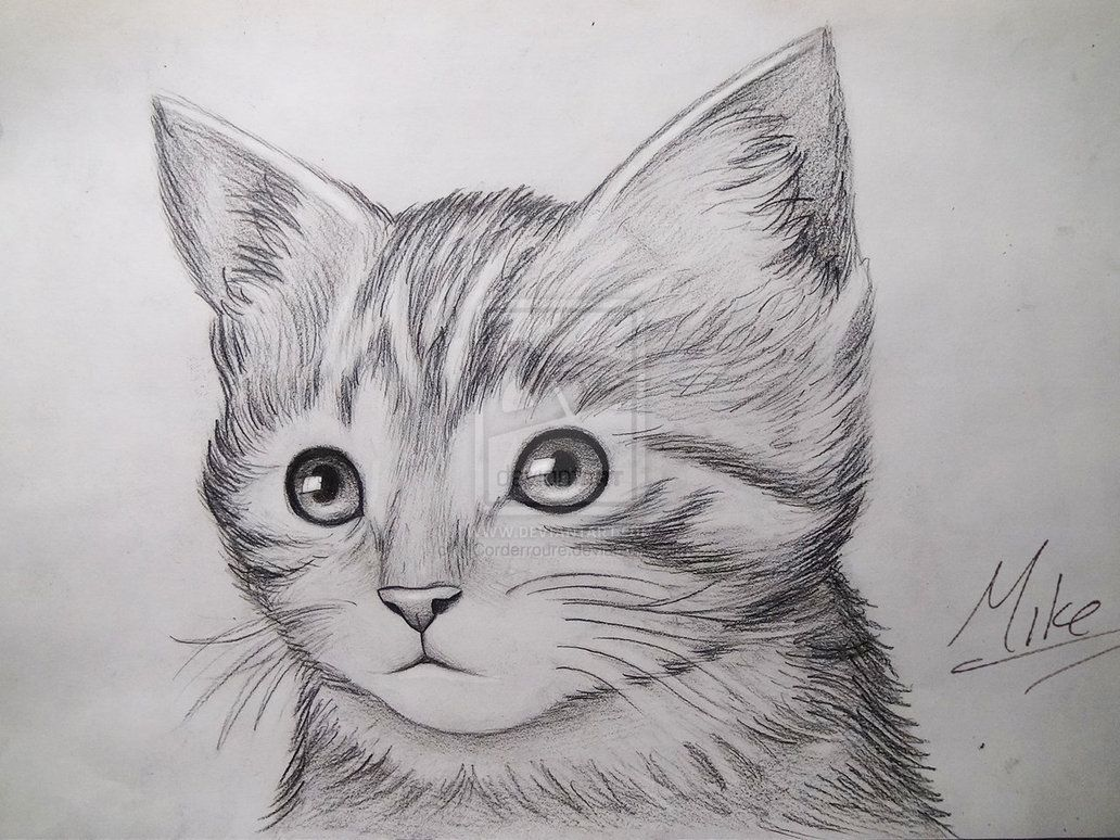 Cute Kitty Drawing by MCorderroure on deviantART in 2020 ...