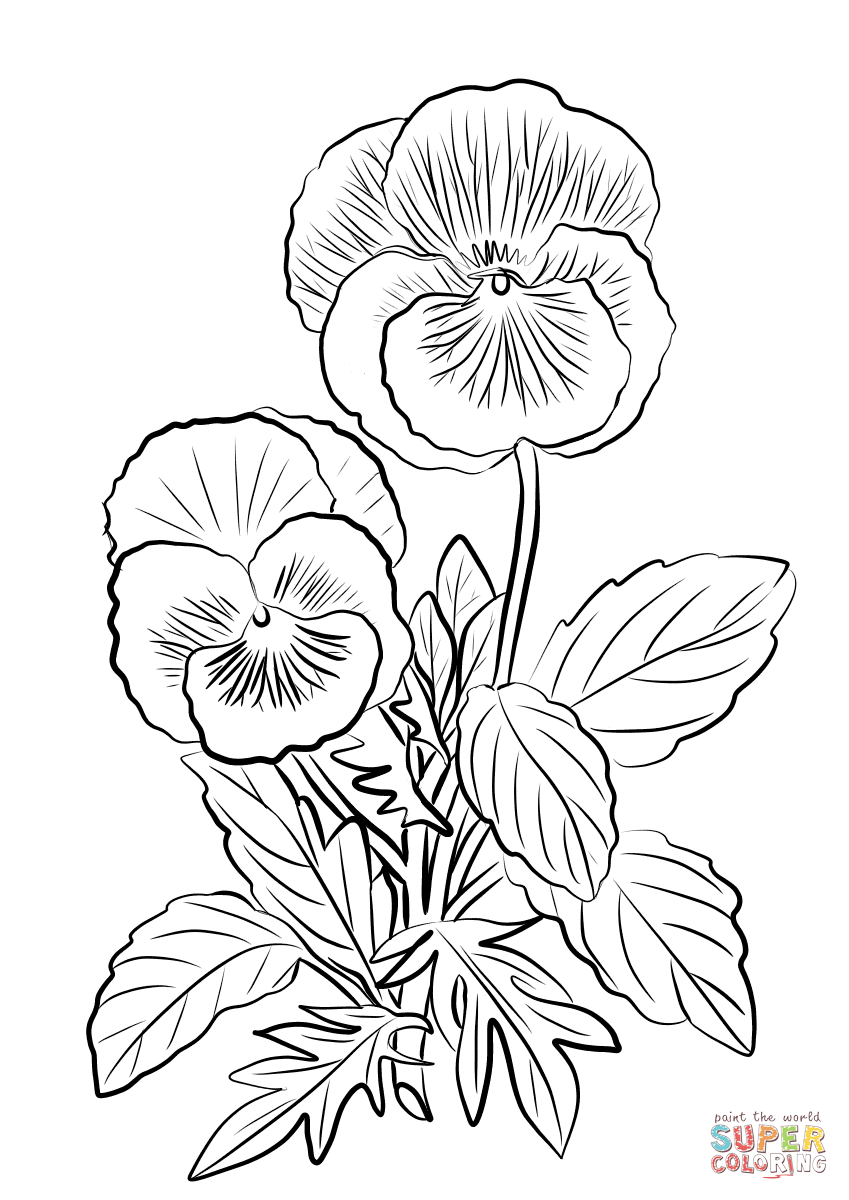Gallery Two Pansies coloring page   Free Printable Coloring Pages is free HD wallpaper.