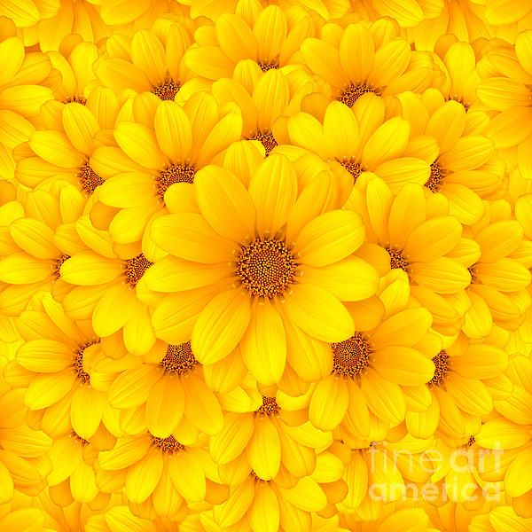 Whispers of yellow daisies pinterest flowers yellow whispers of yellow mightylinksfo