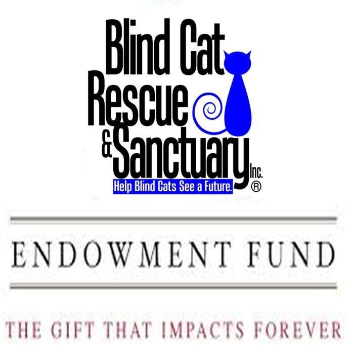 Blind Cat Rescue & Sanctuary - A life time care sanctuary for blind, FIV & FELV+ cats