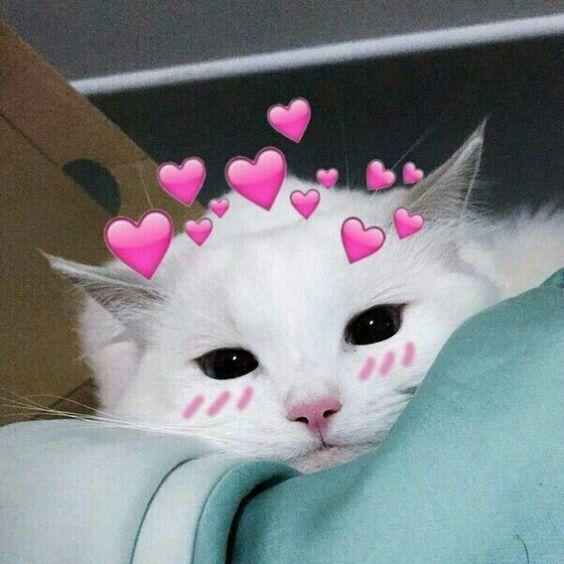 Pin by Tường Vyy on Mèo | Cute love memes, Cat aesthetic ...