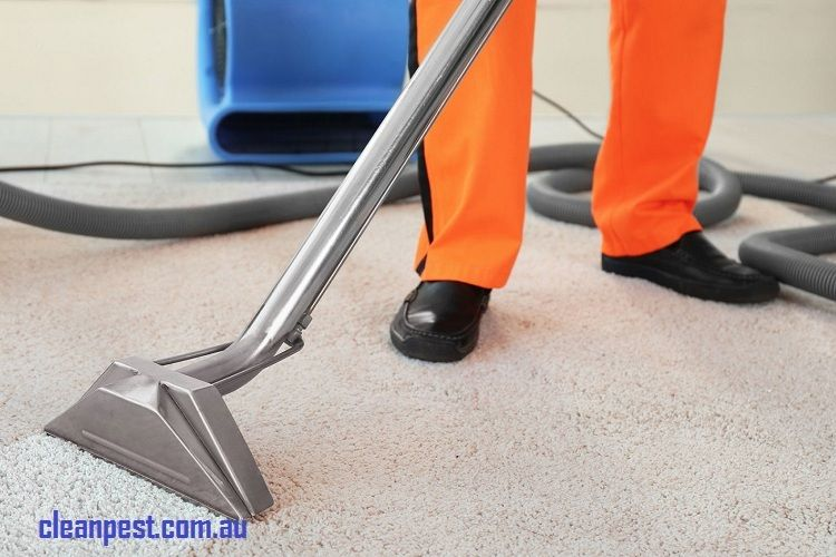 Carpet Cleaning Brisbane Things To Know Before You Hire How To Clean Carpet Cleaning Carpet