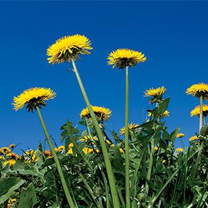 How to Deal with Weeds in Your Garden The Organic Way: