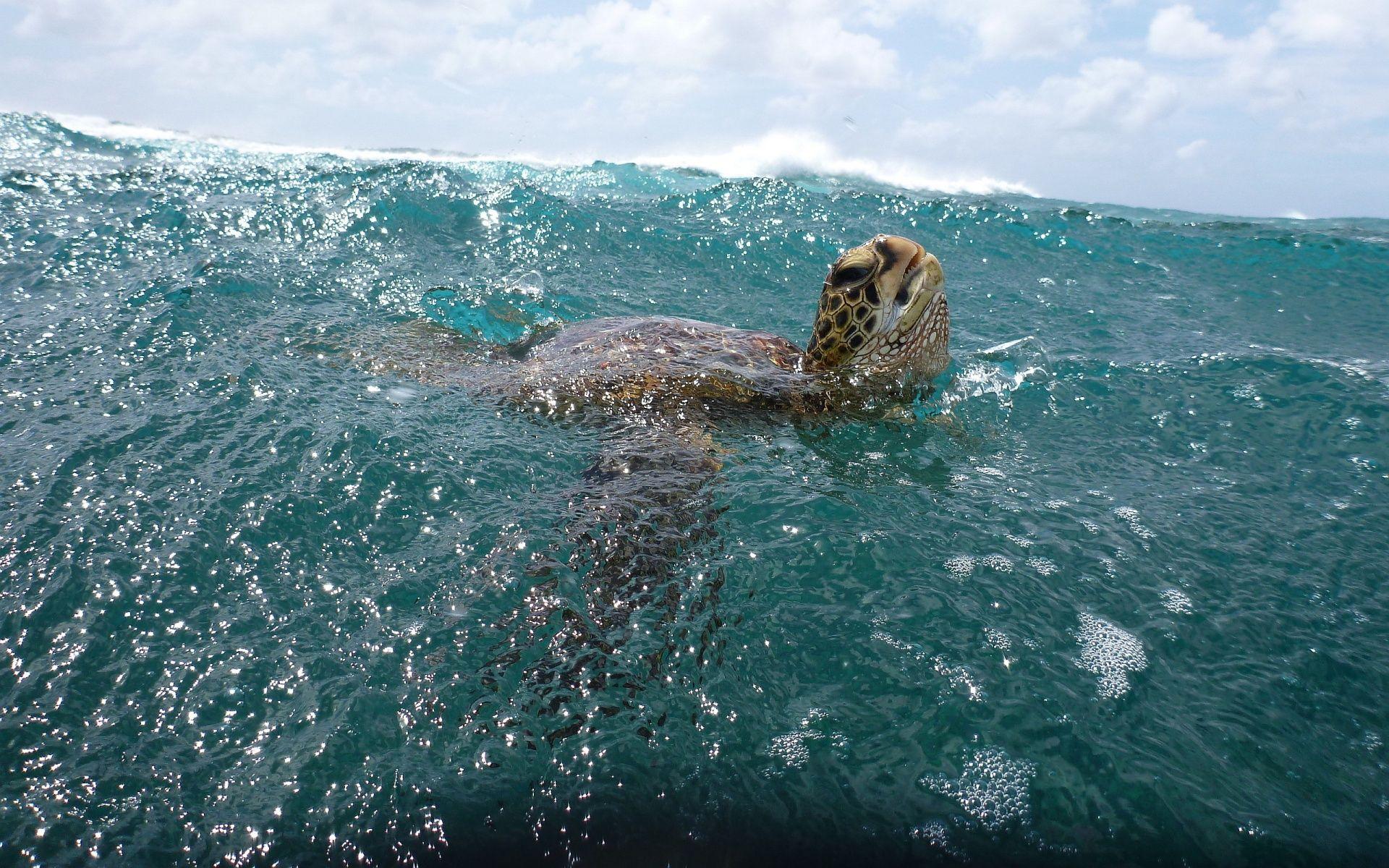 Ultra HD Turtle Ocean 1920×1200