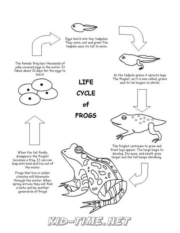 Frog Life Cycle - Animals Coloring Book Pages Sheets ...