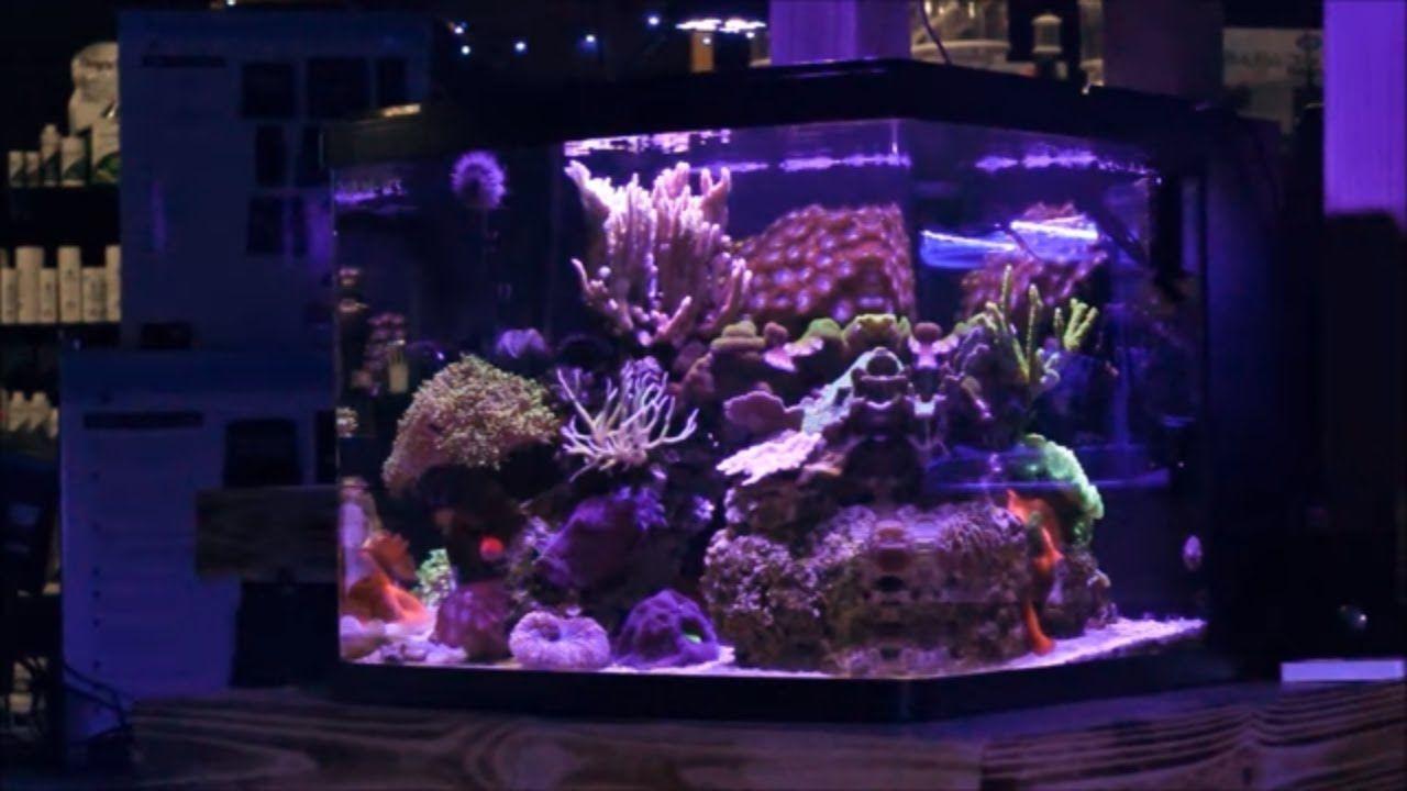 Nano Tank Spotlight   29 Gallon Biocube Mixed Reef & Nano Tank Spotlight   29 Gallon Biocube Mixed Reef   Saltwater Tank ...