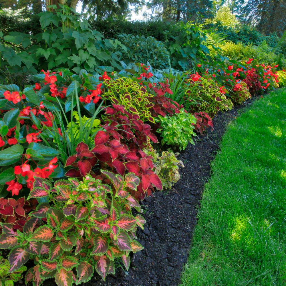 How to Plan Landscape for Shady Areas