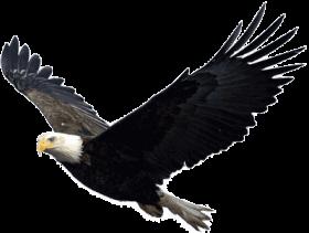 Eagle Png Image Free Picture Download Bald Eagle Eagle Png