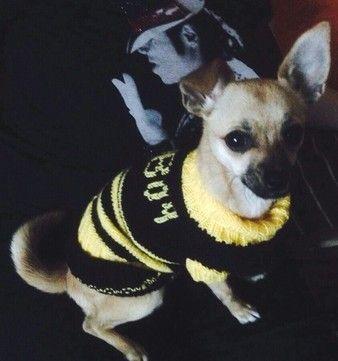 selbst gestrickter Pullover für Chihuahua | gestrickte Hunde ...