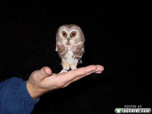 Cute Baby Owls | baby owl 4 Baby owls are the new kittens (27 Photos)
