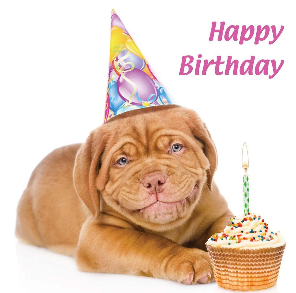 Details about Cute Birthday Card Smiling Dogue de