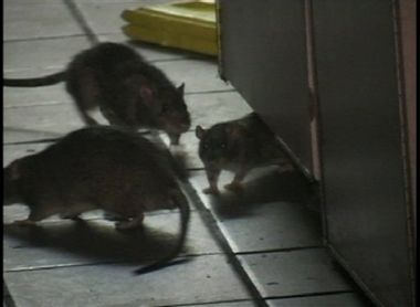 How To Keep Pests Away From Your Restaurant Www Griffinpestmgmt Com Rats Termite Treatment Pests