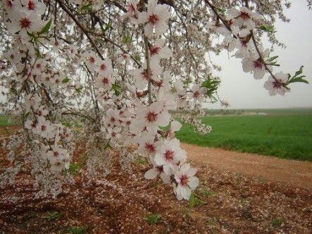 سبحان الخالق ما أجمل شجر اللوز Plants Flowers Dandelion