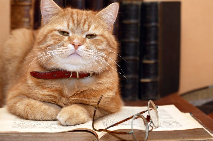 Top 5 Books Any Cat Lover Will Want to Snuggle Up on the