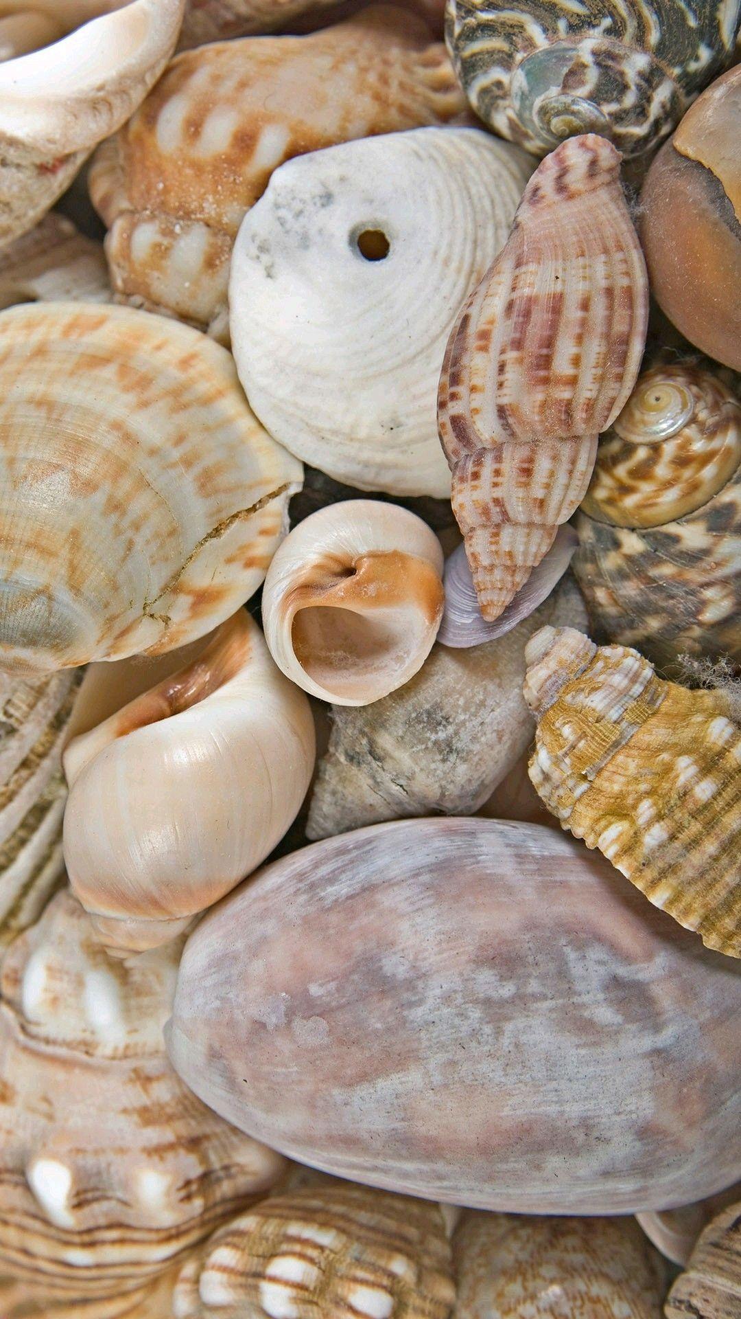 Pin By Lisa Green On Seashells Sea Shells Shells Clams