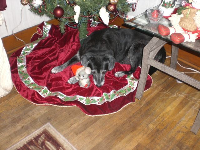 She has blankets to lay on but I guess she is ready for Christmas she is 21 years old so she rules