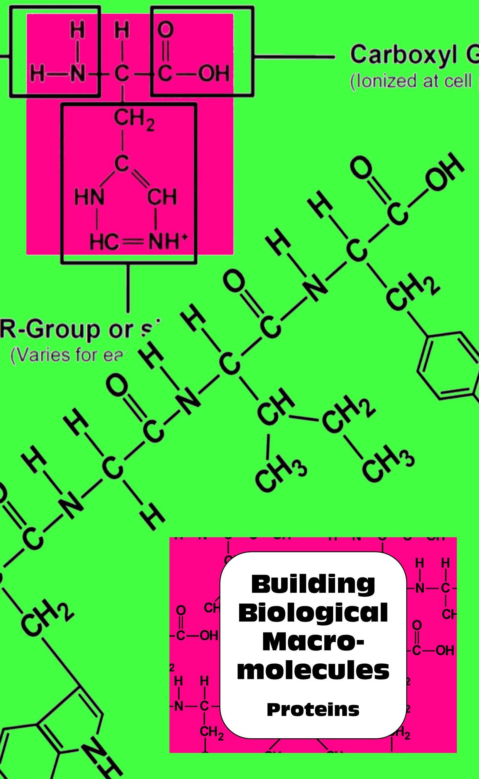 Proteins Biochemistry Building Biological Macromolecules High School Biology