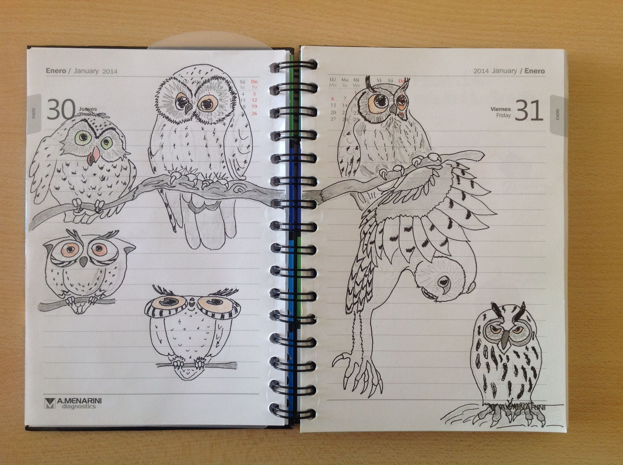 My Scetchbook - OWL !!!