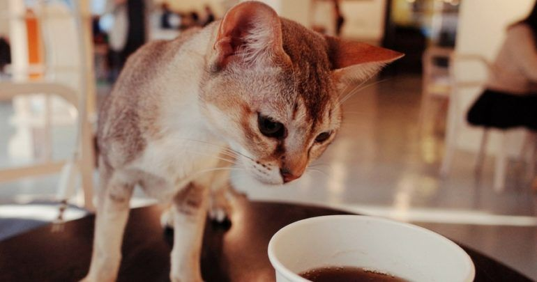 Chicago's First Cat Cafe Is Opening in the Tree House