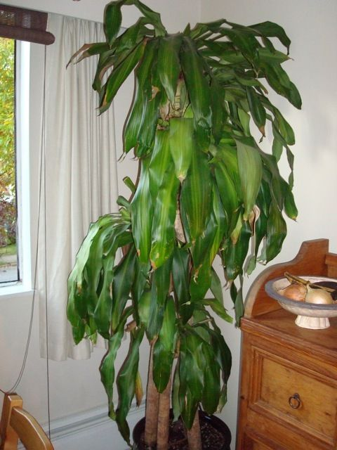 house plants when to repot