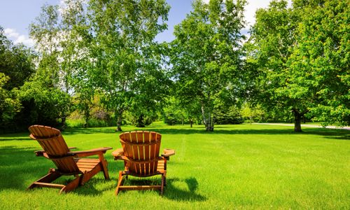 Tired of an ugly Lawn? Let Promo Lawn Care handle your lawn care ...
