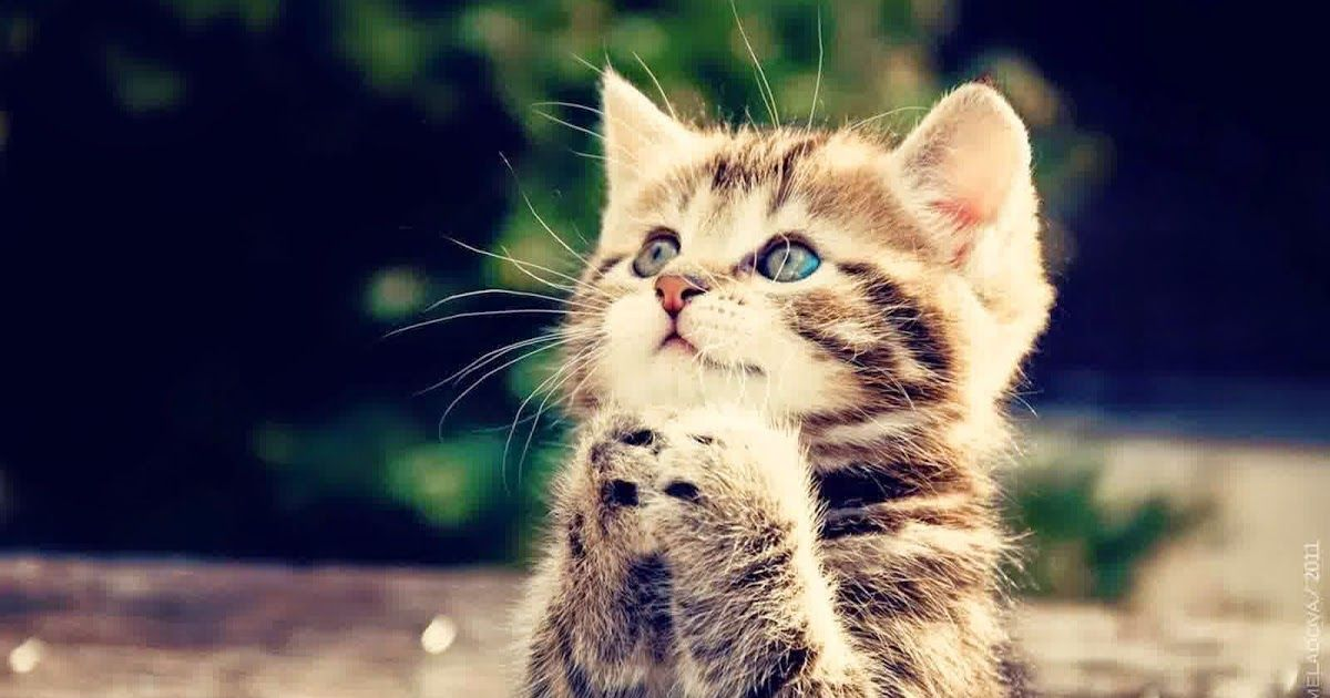 Wow 20 Gambar Wallpaper Kucing Di 2020 Cute Kittens Kucing