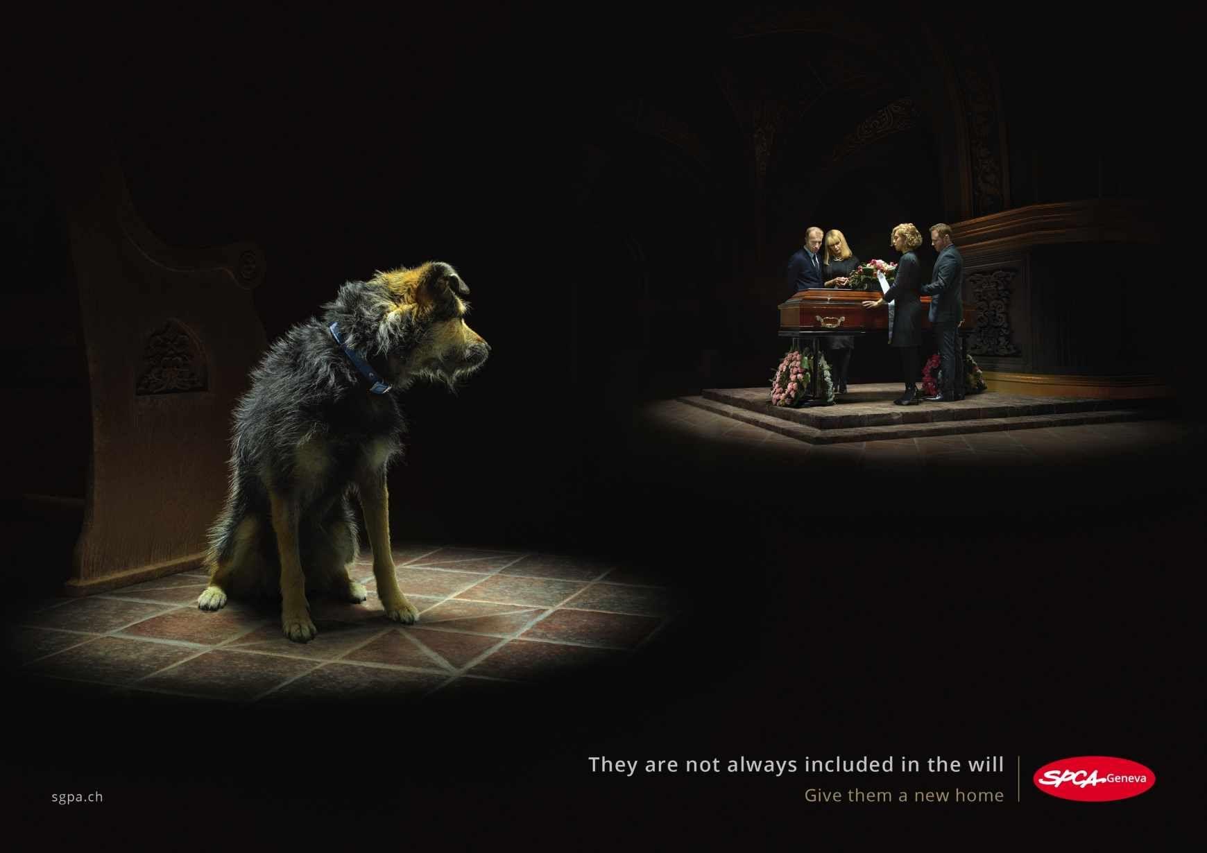 SPCA: Death