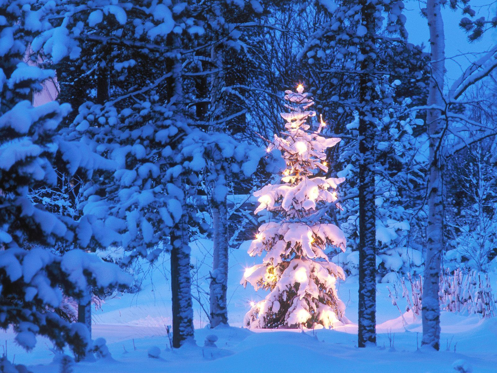 Christmas nature scenes wallpapers 9 christmas nature scenes christmas nature scenes wallpapers 9 voltagebd Image collections