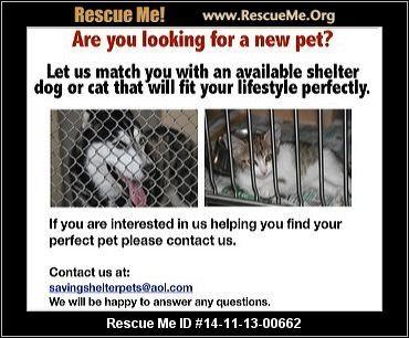 Florida Yorkie Rescue ― ADOPTIONS ― Poodle