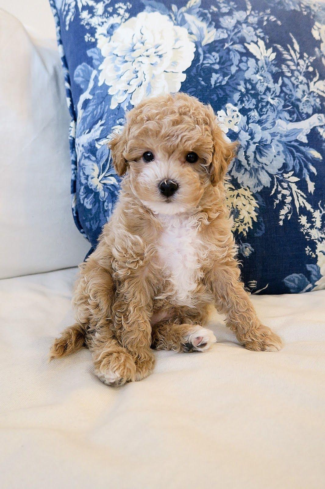Our New Puppy Hamilton Cute Animals Puppies Dog Blog