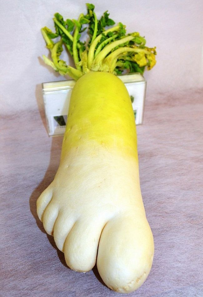Oddly Shaped Fruits And Veggies That Will Make You Look Twice - 20 funny fruits and vegetables looking exactly like something else