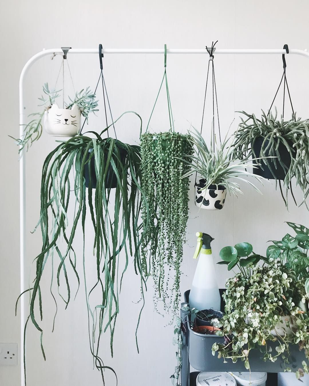 A Temporary Solution To Hold My Hanging Plants Until I Figure Out