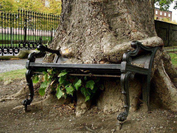 Eater tree - Streetart in Germany