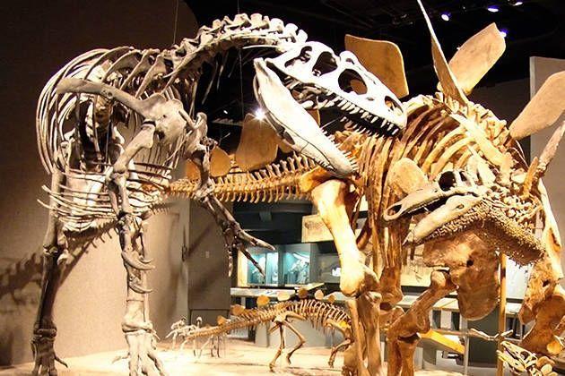 Colorado Musums Natural History Dino
