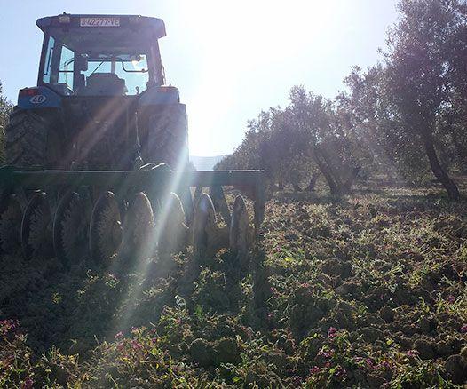 Trabajos agrícolas