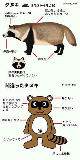 Temporary おしゃれまとめの人気アイデア Pinterest Bear Pig 動物 図鑑 動物 タヌキ