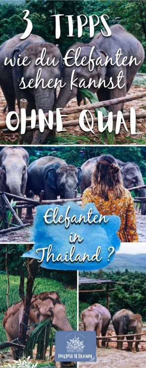 Elefanten sehen in Chiang Mai #backpackingthailand