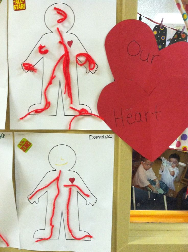 draw an outline of a body  draw a heart and discuss how