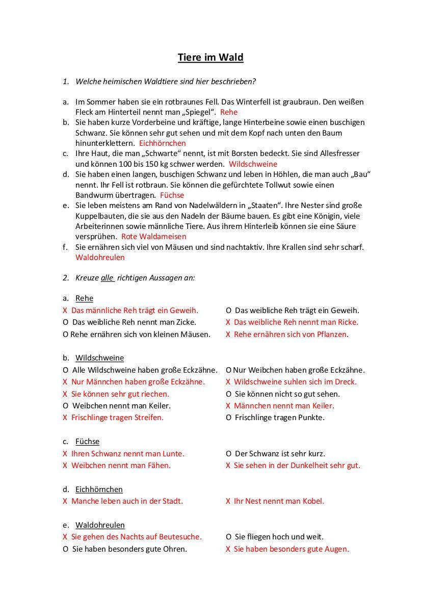 Sachkunde Grundschule Fur Stockwerke Des Waldes Arbeitsblatt Grundschule Sachkunde Stockwerke Des Waldes