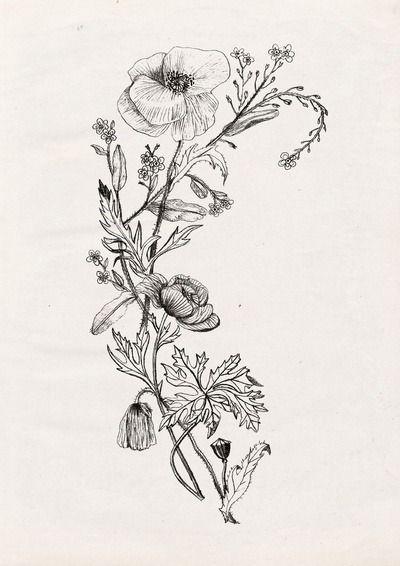 botanic poppy  Tumblr  botanica  Pinterest  Tattoo Tatting
