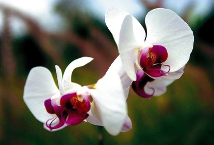 Orchid Flowers Orchid Flower Blooming Orchid Orchids
