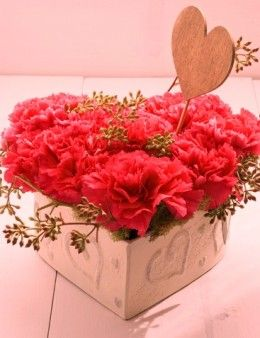 Carnation for mother