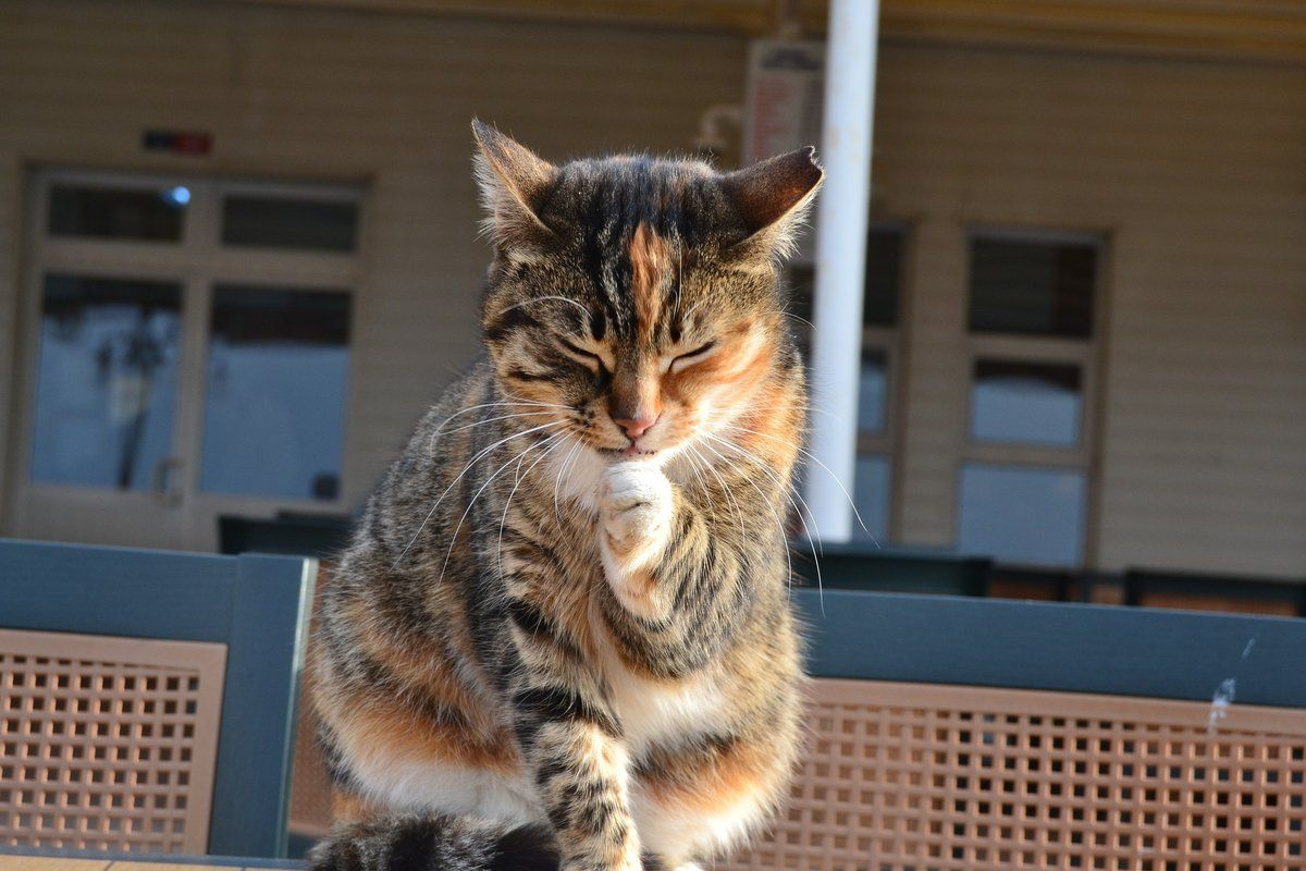 Should You Let Your Cat Outside Cats Outside Cats Indoor Cat