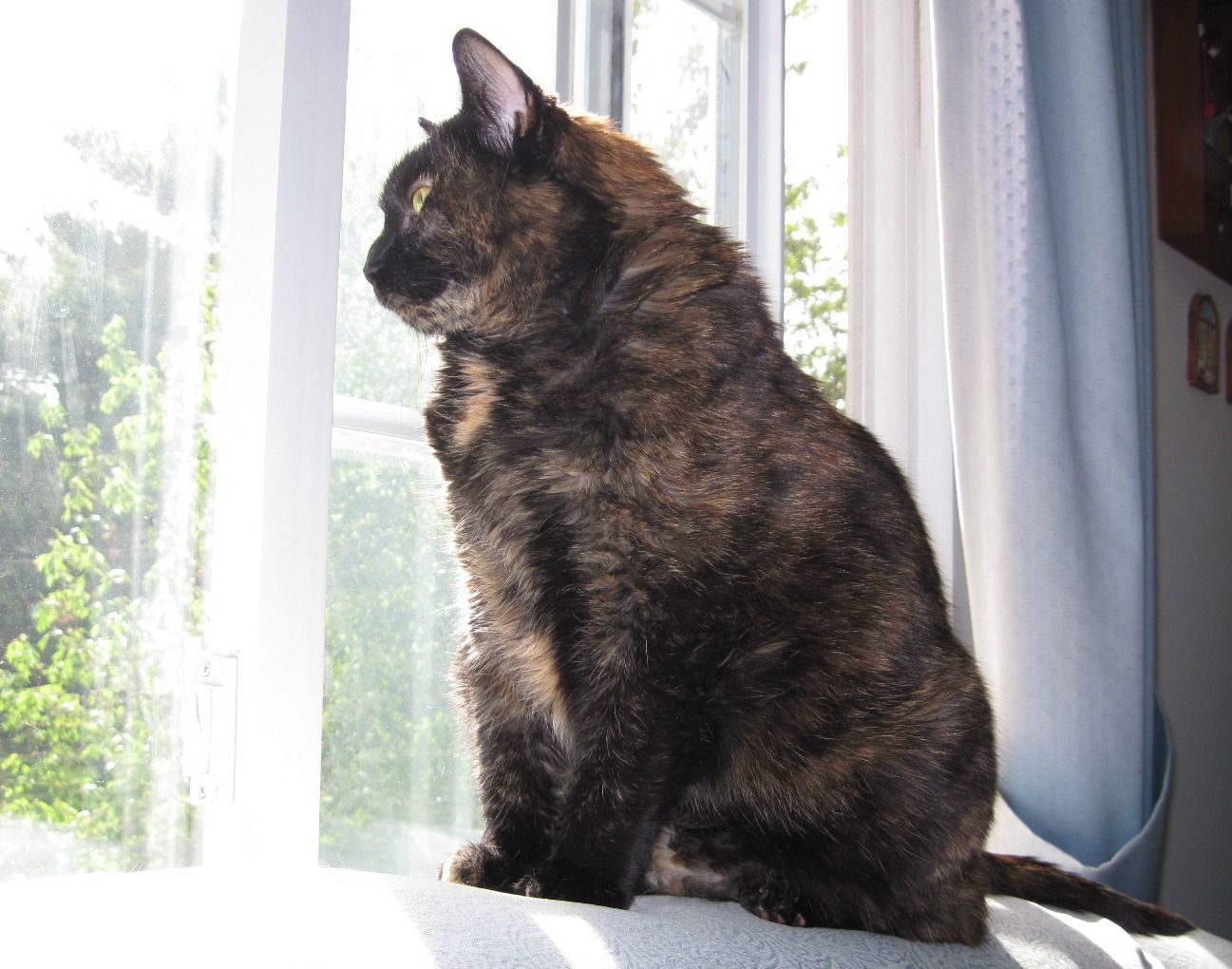 how to help a grieving cat