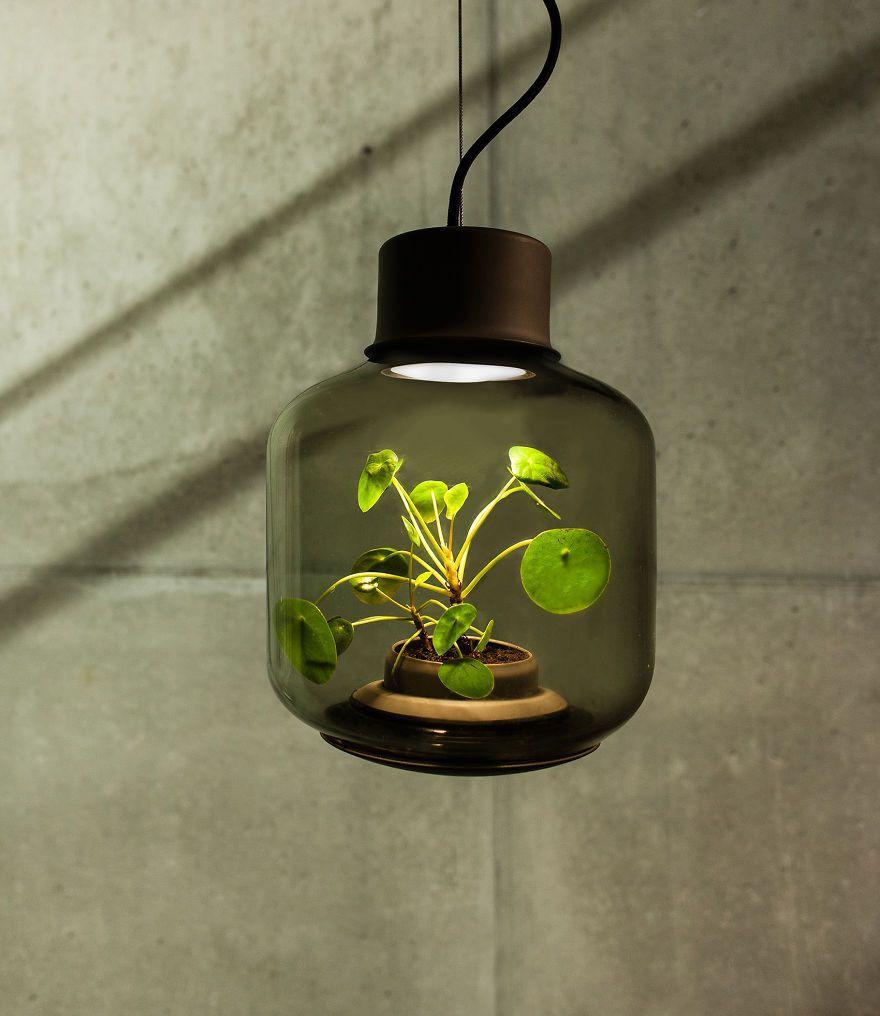 Pin by erica gilbertson on green u garden pinterest terraria