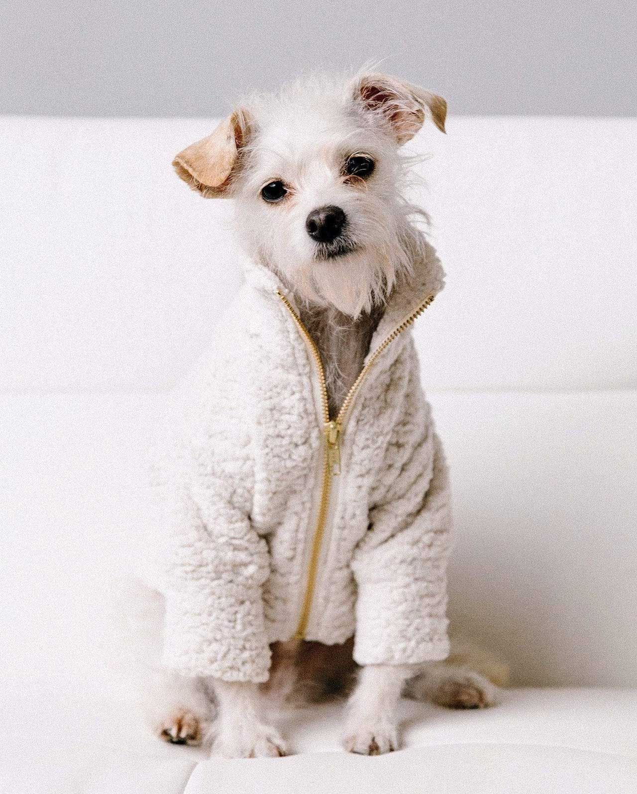 7 Modern Dog Outerwear Options To Keep Them Warm Design Milk In 2021 Dog Clothes Dog Jacket Modern Dog [ 1595 x 1280 Pixel ]