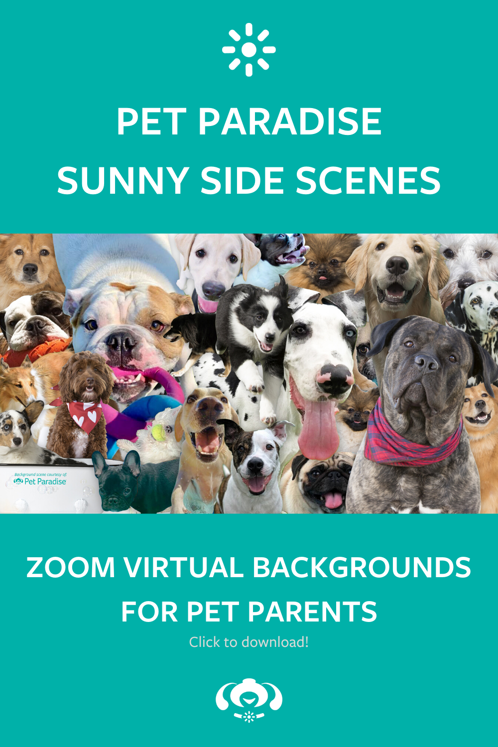 Free Pet Zoom Virtual Backgrounds in 2020 Pet paradise