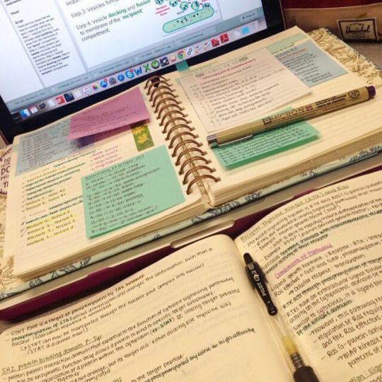 Studying in Wonderland