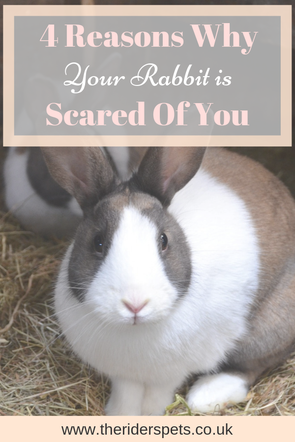 4 Reasons Why Your Rabbit Is Scared Of You Rabbit Scared My Animal