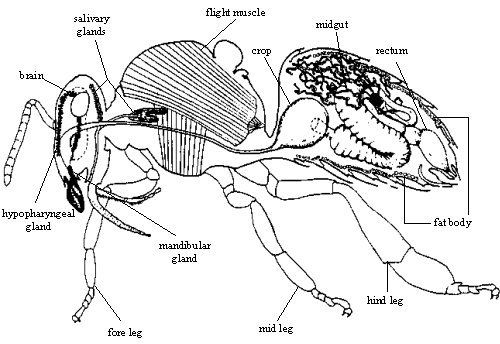 5th Honey Bee Pests Diseases And Poisoning Revision Post Nosema